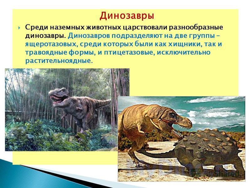 Динозавры Среди наземных животных царствовали разнообразные динозавры. Динозавров подразделяют на две группы – ящеротазовых, среди которых были как хищники, так и травоядные формы, и птицетазовые, исключительно растительноядные.