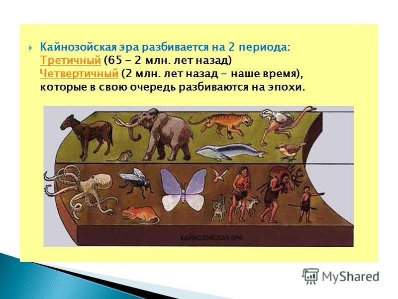 Кайнозойская эра разбивается на 2 периода: Третичный (65 - 2 млн. лет назад) Четвертичный (2 млн. лет назад - наше время), которые в свою очередь разбиваются на эпохи. Третичный Четвертичный