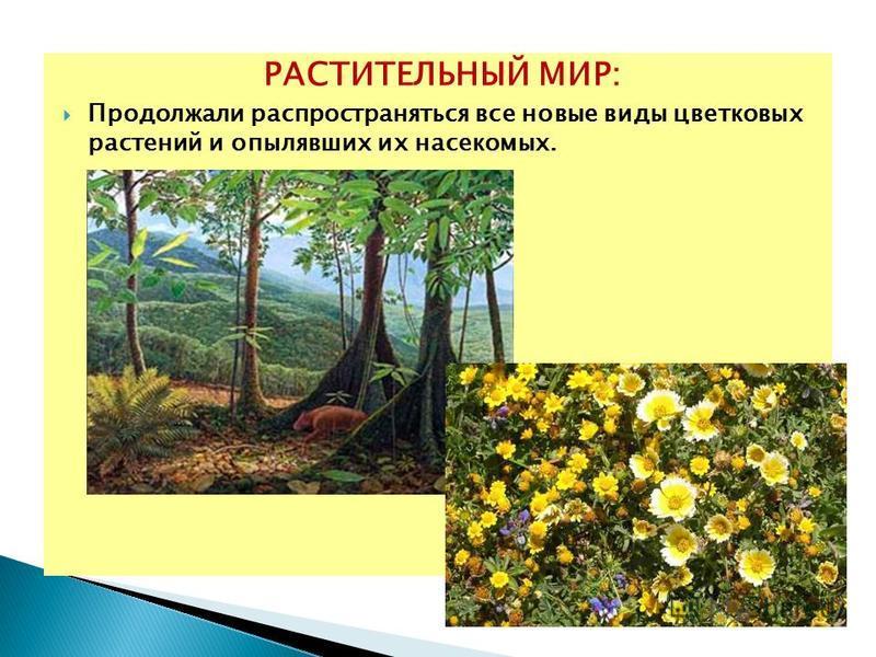 РАСТИТЕЛЬНЫЙ МИР: Продолжали распространяться все новые виды цветковых растений и опылявших их насекомых.