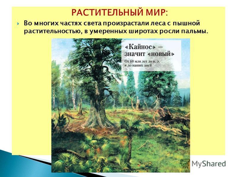 РАСТИТЕЛЬНЫЙ МИР: Во многих частях света произрастали леса с пышной растительностью, в умеренных широтах росли пальмы.