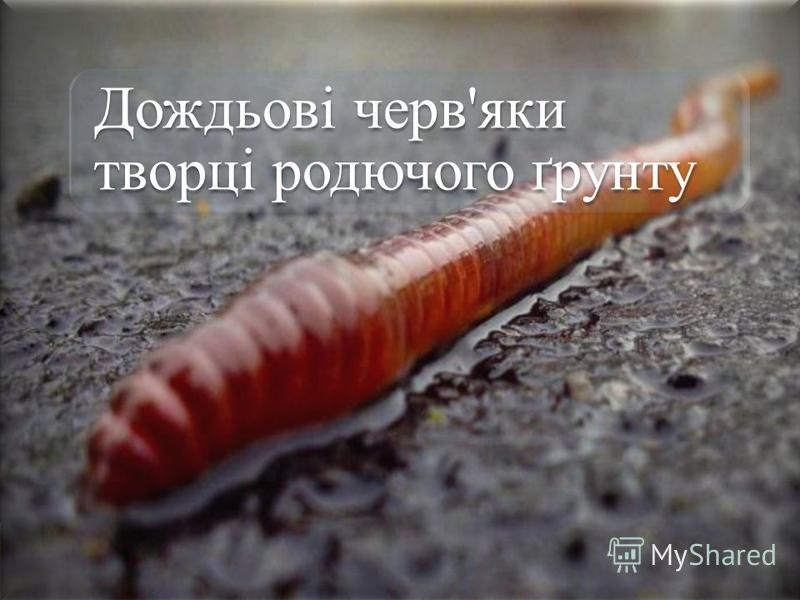 Дождьові черв'яки творці родючого ґрунту