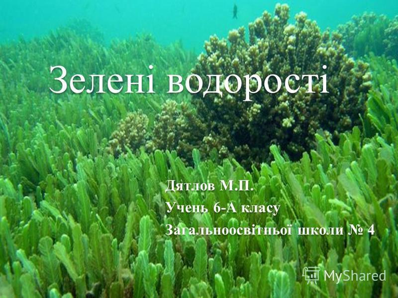 Зелені водорості Дятлов М.П. Учень 6-А класу Загальноосвітньої школи 4
