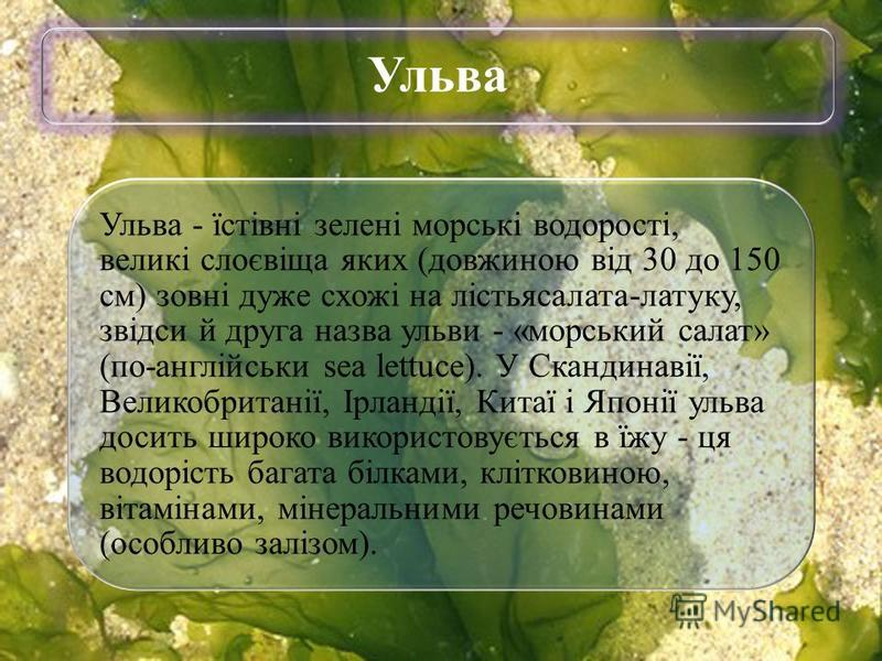Ульва Ульва - їстівні зелені морські водорості, великі слоєвіща яких (довжиною від 30 до 150 см) зовні дуже схожі на лістьясалата-латуку, звідси й друга назва ульви - «морський салат» (по-англійськи sea lettuce). У Скандинавії, Великобританії, Ірланд