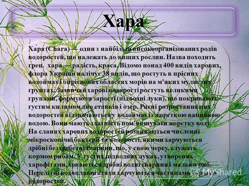 Хара Ха́ра (Chara) один з найбільш високоорганізованих родів водоростей, що належать до вищих рослин. Назва походить грец. хара радість, краса. Відомо понад 400 видів харових, флора України налічує 38 видів, що ростуть в прісних водоймах і опріснених