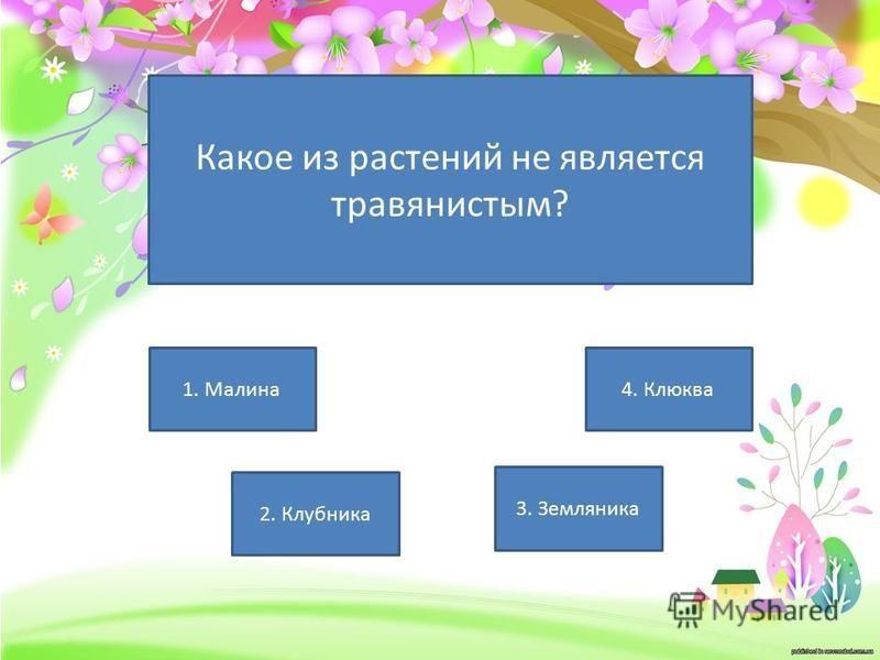 Какое из растений не является травянистым? 4. Клюква 3. Земляника 2. Клубника 1. Малина