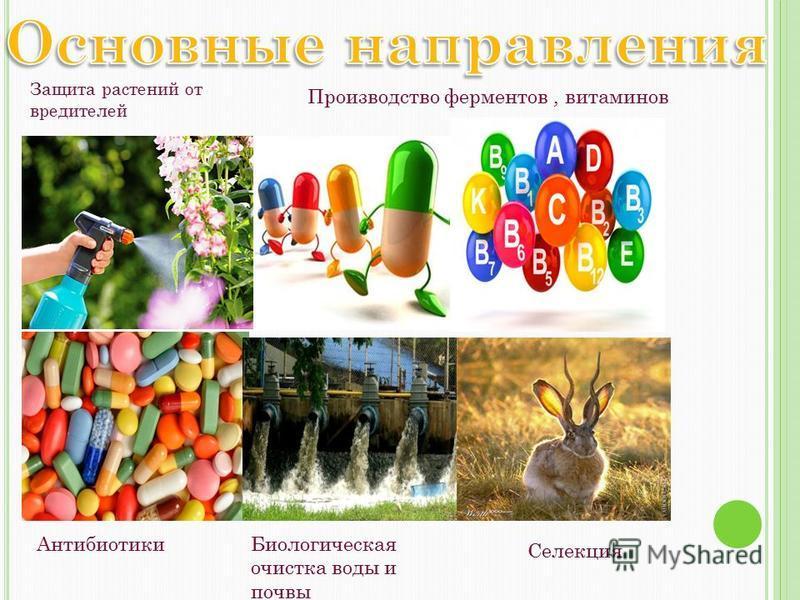 Защита растений от вредителей Антибиотики Производство ферментов, витаминов Биологическая очистка воды и почвы Селекция