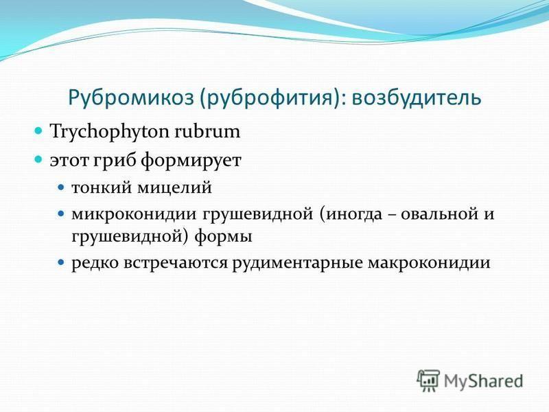 Рубромикоз (руброфития): возбудитель Trychophyton rubrum этот гриб формирует тонкий мицелий микроконидии грушевидной (иногда – овальной и грушевидной) формы редко встречаются рудиментарные макроконидии
