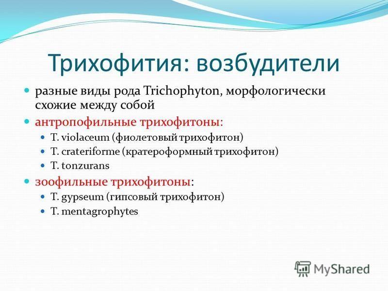 Трихофития: возбудители разные виды рода Trichophyton, морфологически схожие между собой антропофильные трихофитоны: T. violaceum (фиолетовый трихофитон) T. crateriforme (кратероформный трихофитон) T. tonzurans зоофильные трихофитоны: T. gypseum (гип