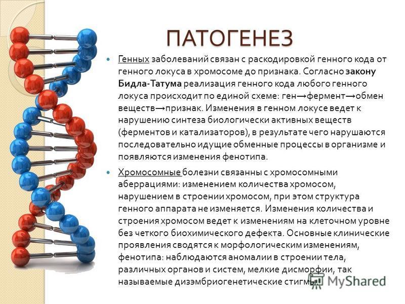 ПАТОГЕНЕЗ Генных заболеваний связан с раскодировкой генного кода от генного локуса в хромосоме до признака. Согласно закону Бидла - Татума реализация генного кода любого генного локуса происходит по единой схеме : ген фермент обмен веществ признак. И