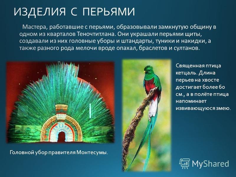 Священная птица кетсаль. Длина перьев на хвосте достигает более 60 см., а в полёте птица напоминает извивающуюся змею. Головной убор правителя Монтесумы.