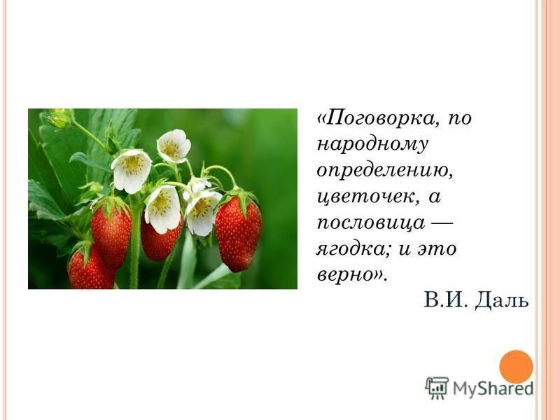 «Поговорка, по народному определению, цветочек, а пословица ягодка; и это верно». В.И. Даль