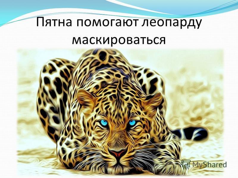 Пятна помогают леопарду маскироваться