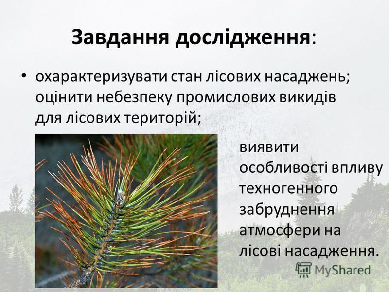 Завдання дослідження: охарактеризувати стан лісових насаджень; оцінити небезпеку промислових викидів для лісових територій; виявити особливості впливу техногенного забруднення атмосфери на лісові насадження.