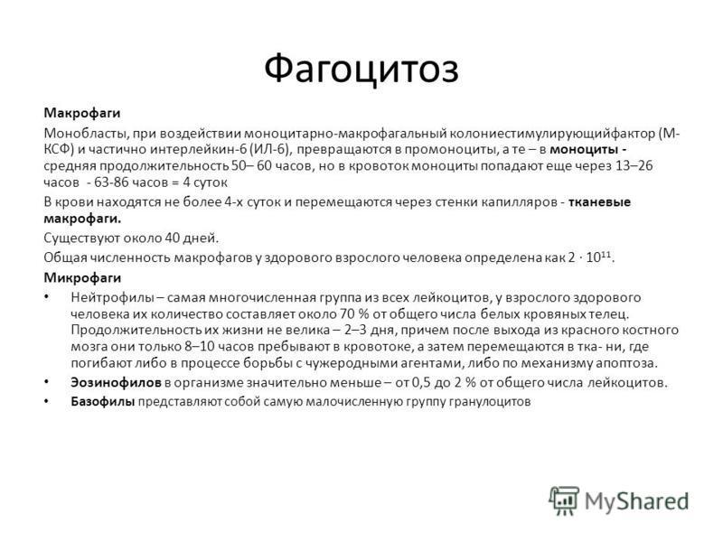Фагоцитоз Макрофаги Монобласты, при воздействии моноцитарно-макрофагальный̆ колониестимулирующий̆фактор (М- КСФ) и частично интерлейкин-6 (ИЛ-6), превращаются в про моноциты, а те – в моноциты - средняя продолжительность 50– 60 часов, но в кровоток