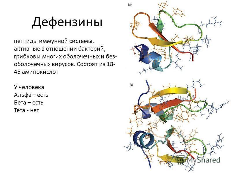 Дефензины пептиды иммунной системы, активные в отношении бактерий, грибков и многих оболочечных и без- оболочечных вирусов. Состоят из 18- 45 аминокислот У человека Альфа – есть Бета – есть Тета - нет