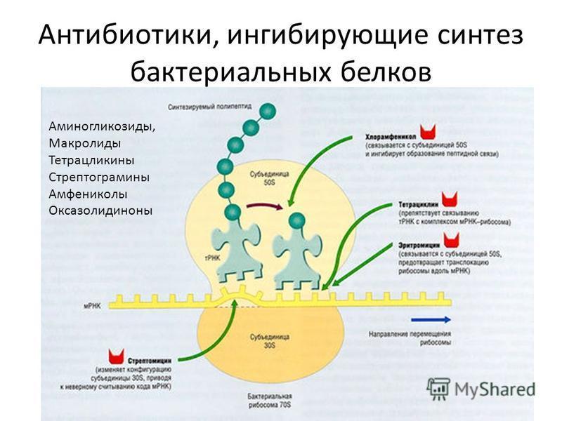 Антибиотики, ингибирующие синтез бактериальных белков Аминогликозиды, Макролиды Тетрацликины Стрептограмины Амфениколы Оксазолидиноны