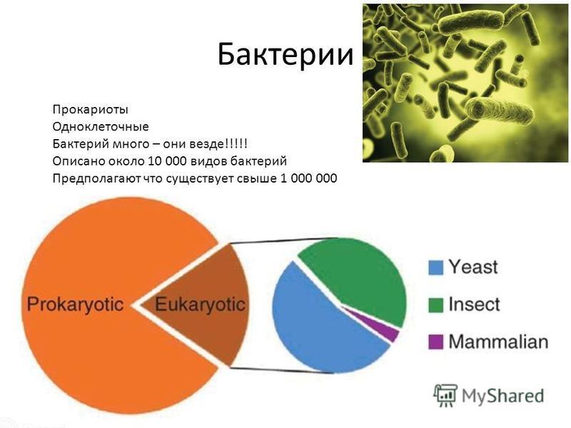 Бактерии Прокариоты Одноклеточные Бактерий много – они везде!!!!! Описано около 10 000 видов бактерий Предполагают что существует свыше 1 000 000