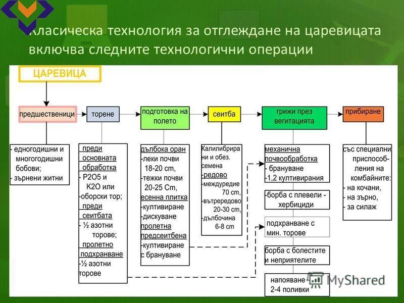 Класическа технология за отглеждане на царевицата включва следните технологични операции