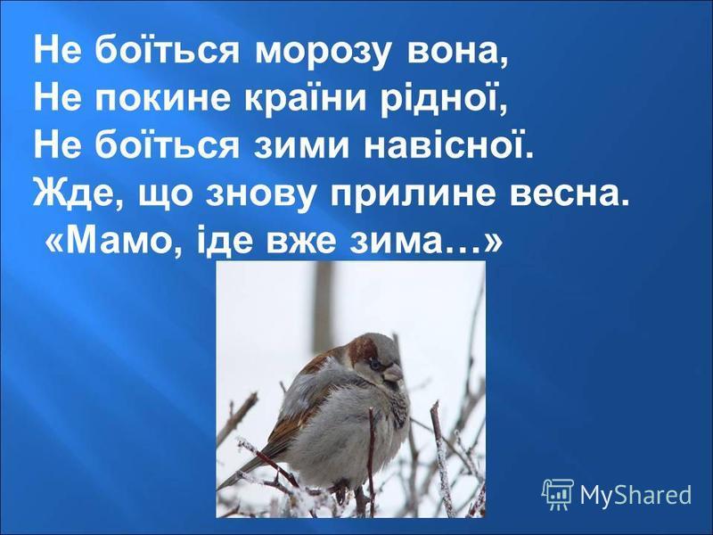 Не боїться морозу вона, Не покине країни рідної, Не боїться зими навісної. Жде, що знову прилине весна. «Мамо, іде вже зима…»