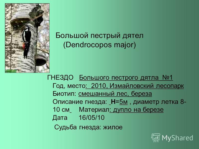 Были найдены и определены следующие птицы и их гнезда: Птица Маршрут 1 Маршрут 2 Маршрут 3 Большой пестрый дятел + Малый пестрый дятел + Сорока + Утка -кряква + Гоголь + Поползень +