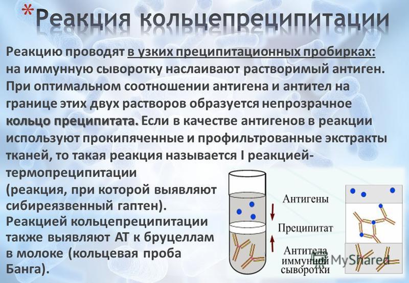 (реакция, при которой выявляют сибиреязвенный гаптен). Реакцией кольцепреципитации также выявляют AT к бруцеллам в молоке (кольцевая проба Банга). кольцо преципитата. Реакцию проводят в узких преципитационных пробирках: на иммунную сыворотку наслаива