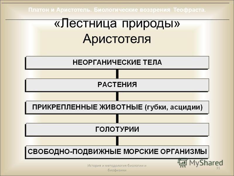 «Лестница природы» Аристотеля История и методология биологии и биофизики 31 Платон и Аристотель. Биологические воззрения Теофраста.