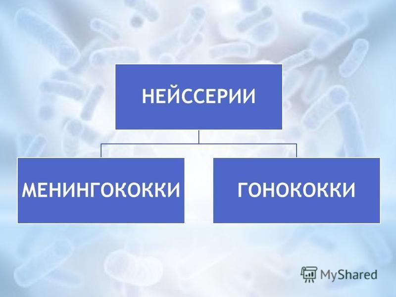 НЕЙССЕРИИ МЕНИНГОКОККИГОНОКОККИ