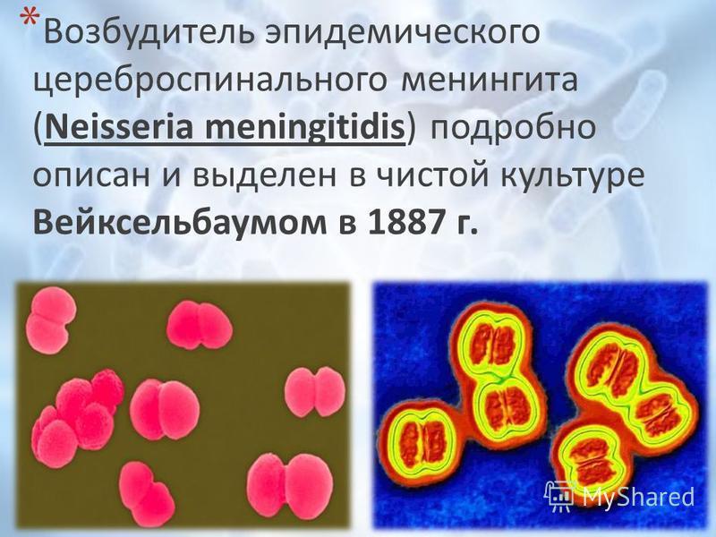 * Возбудитель эпидемического цереброспинального менингита (Neisseria meningitidis) подробно описан и выделен в чистой культуре Вейксельбаумом в 1887 г.