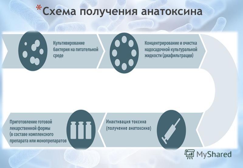 * Схема получения анатоксина