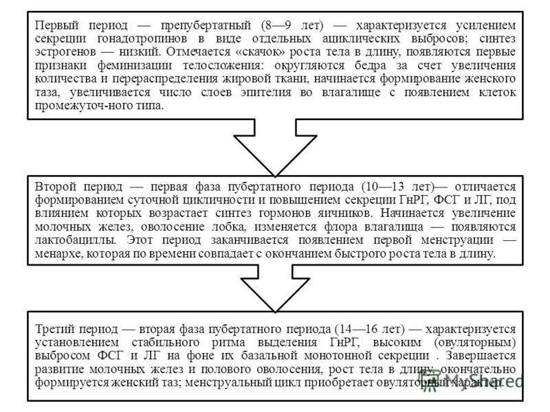 Третий период вторая фаза пубертатного периода (1416 лет) характеризуется установлением стабильного ритма выделения ГнРГ, высоким (овуляторным) выбросом ФСГ и ЛГ на фоне их базальной монотонной секреции. Завершается развитие молочных желез и полового