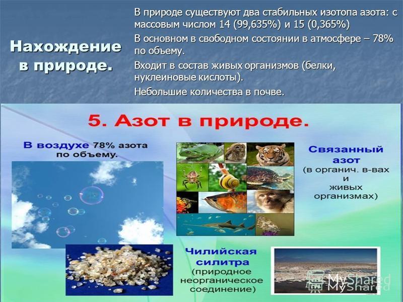 Нахождение в природе. В природе существуют два стабильных изотопа азота: с массовым числом 14 (99,635%) и 15 (0,365%) В основном в свободном состоянии в атмосфере – 78% по объему. Входит в состав живых организмов (белки, нуклииновые кислоты). Небольш