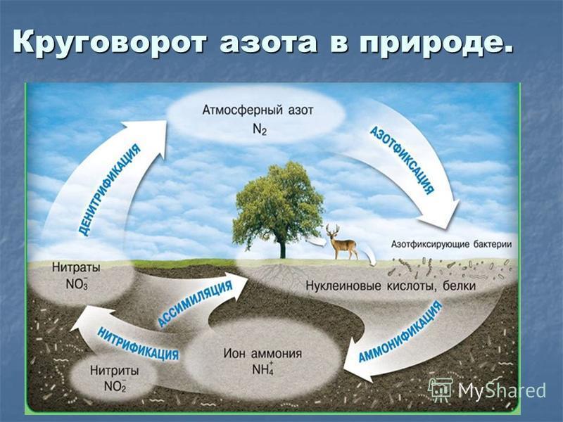 Круговорот азота в природе.