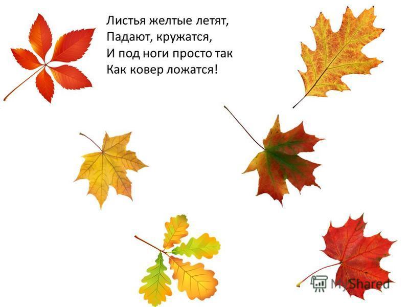 Листья желтые летят, Падают, кружатся, И под ноги просто так Как ковер ложатся!
