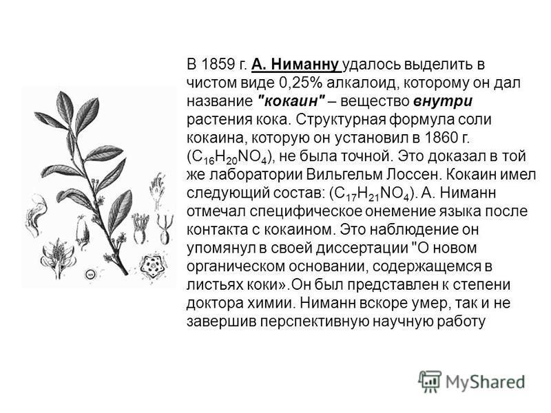 В 1859 г. А. Ниманну удалось выделить в чистом виде 0,25% алкалоид, которому он дал название