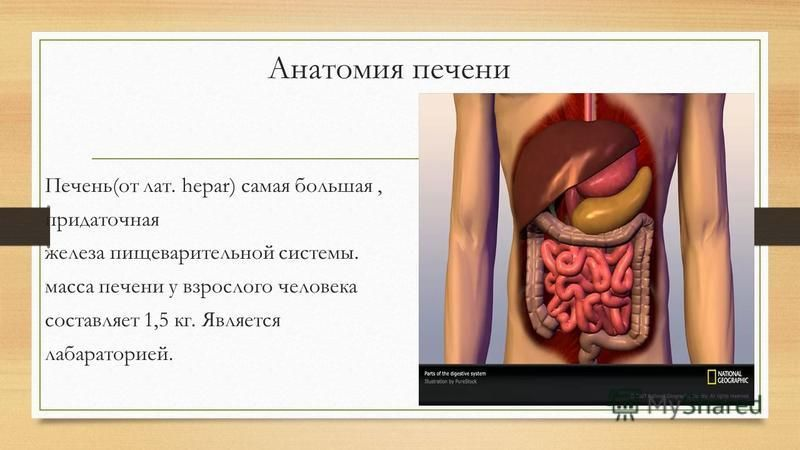 Анатомия печени Печень(от лат. hepar) самая большая, придаточная железа пищеварительной системы. масса печени у взрослого человека составляет 1,5 кг. Является лабораторией.
