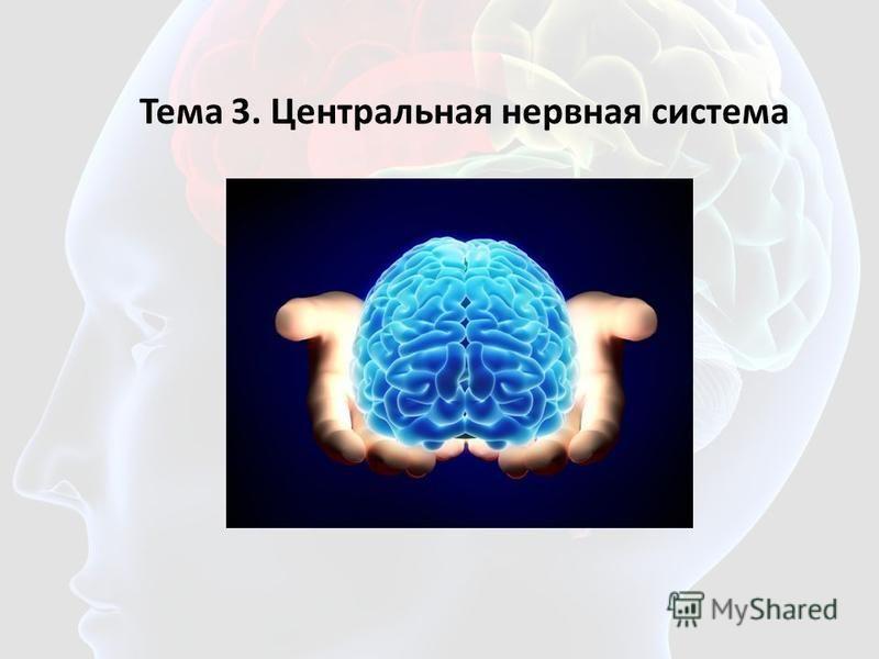 Тема 3. Центральная нервная система