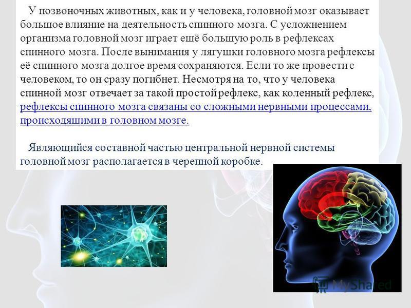 У позвоночных животных, как и у человека, головной мозг оказывает большое влияние на деятельность спинного мозга. С усложнением организма головной мозг играет ещё большую роль в рефлексах спинного мозга. После вынимания у лягушки головного мозга рефл