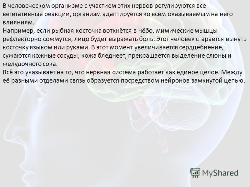 В человеческом организме с участием этих нервов регулируются все вегетативные реакции, организм адаптируется ко всем оказываемым на него влияниям. Например, если рыбная косточка воткнётся в нёбо, мимические мышцы рефлекторно сожмутся, лицо будет выра