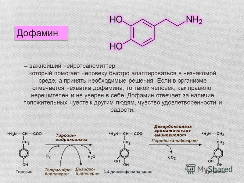 Дофамин – важнейший нейротрансмиттер, который помогает человеку быстро адаптироваться в незнакомой среде, а принять необходимые решения. Если в организме отмечается нехватка дофамина, то такой человек, как правило, нерешителен и не уверен в себе. Доф