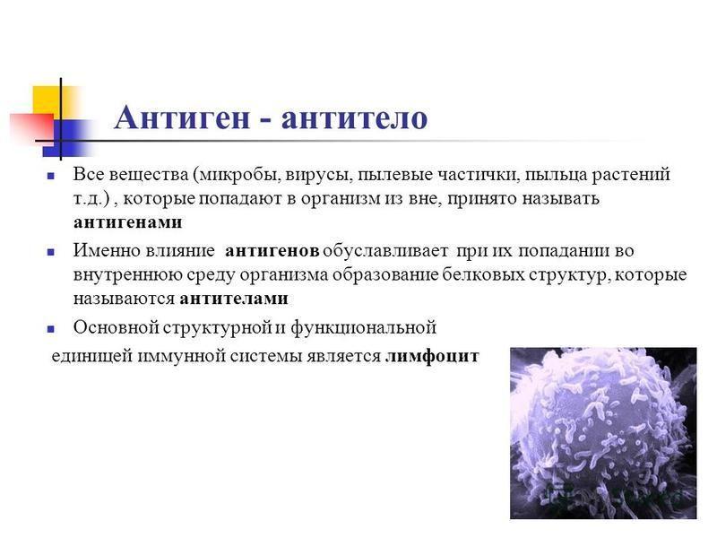 Антиген - антитело Все вещества (микробы, вирусы, пылевые частички, пыльца растений т.д.), которые попадают в организм из вне, принято называть антигенами Именно влияние антигенов обуславливает при их попадании во внутреннюю среду организма образован