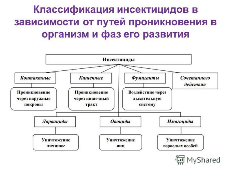 Классификация инсектицидов в зависимости от путей проникновения в организм и фаз его развития