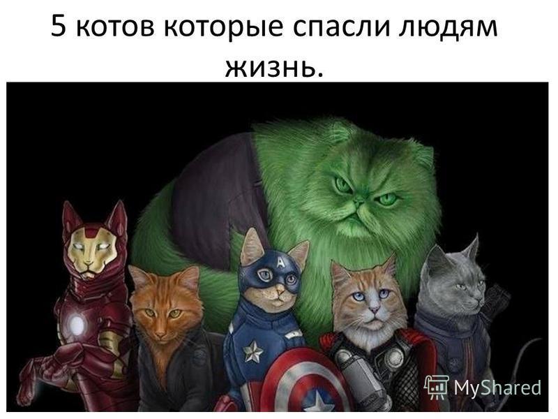 5 котов которые спасли людям жизнь.