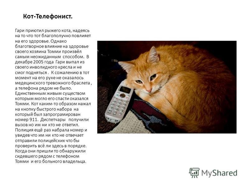 Кот-Телефонист. Гари приютил рыжего кота, надеясь на то что тот благополучно повлияет на его здоровье. Однако благотворное влияние на здоровье своего хозяина Томми произвёл самым неожиданным способом. В декабре 2005 года Гари выпал из своего инвалидн