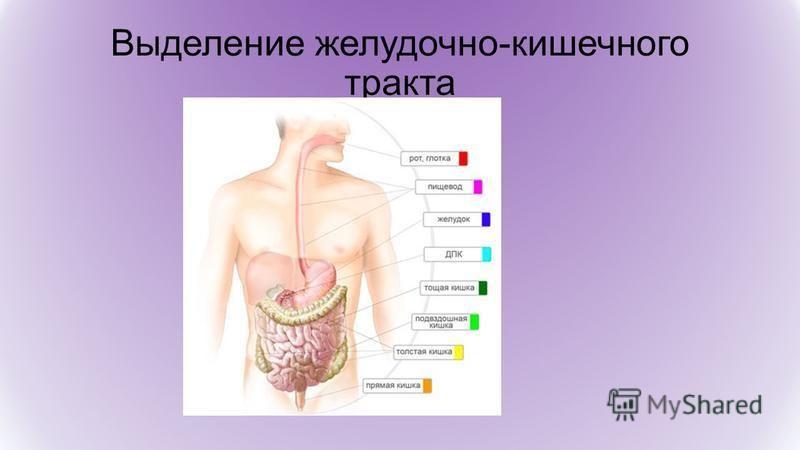 Выделение желудочно-кишечного тракта