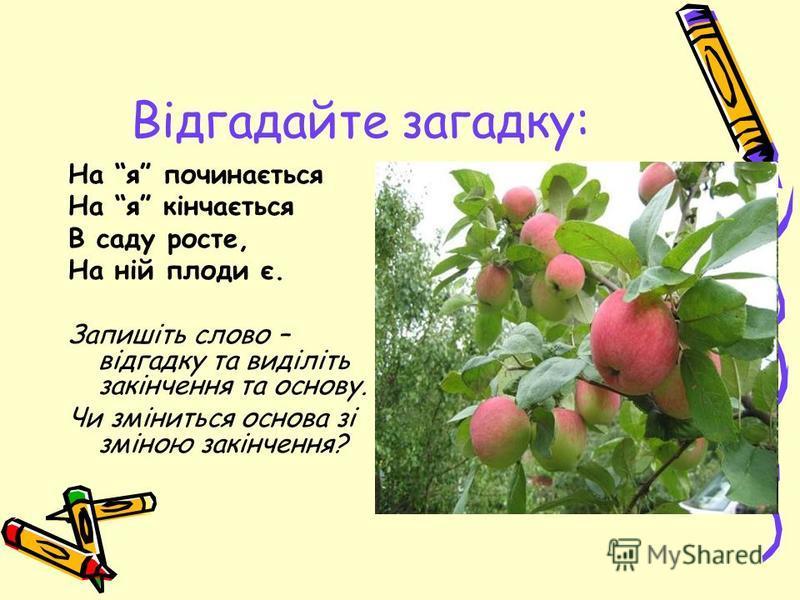 Відгадайте загадку: На я починається На я кінчається В саду росте, На ній плоди є. Запишіть слово – відгадку та виділіть закінчення та основу. Чи зміниться основа зі зміною закінчення?