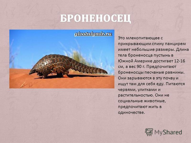 Это млекопитающее с прикрывающим спину панцирем имеет небольшие размеры. Длина тела броненосца пустынь в Южной Америке достигает 12-16 см, а вес 90 г. Предпочитают броненосцы песчаные равнины. Они зарываются в эту почву и ищут там для себя еду. Питаю