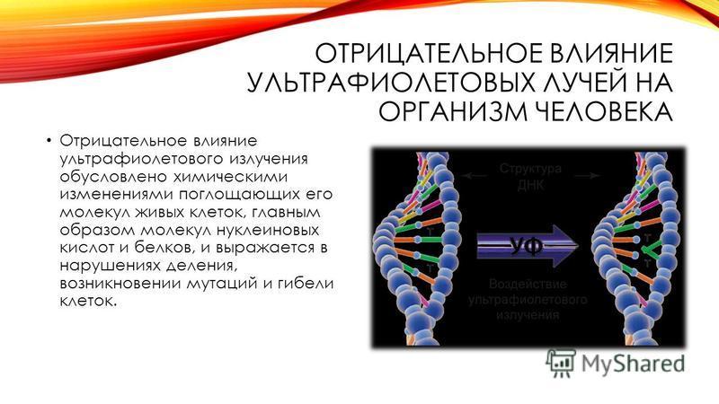 ОТРИЦАТЕЛЬНОЕ ВЛИЯНИЕ УЛЬТРАФИОЛЕТОВЫХ ЛУЧЕЙ НА ОРГАНИЗМ ЧЕЛОВЕКА Отрицательное влияние ультрафиолотового излучения обусловлено химическими изменениями поглощающих его молекул живых клоток, главным образом молекул нуклеиновых кислот и белков, и выраж