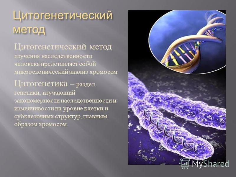 Цитогенетический метод Цитогенетический метод изучения наследственности человека представляет собой микроскопический анализ хромосом Цитогенетика – раздел генетики, изучающий закономерности наследственности и изменчивости на уровне клетки и субклеточ