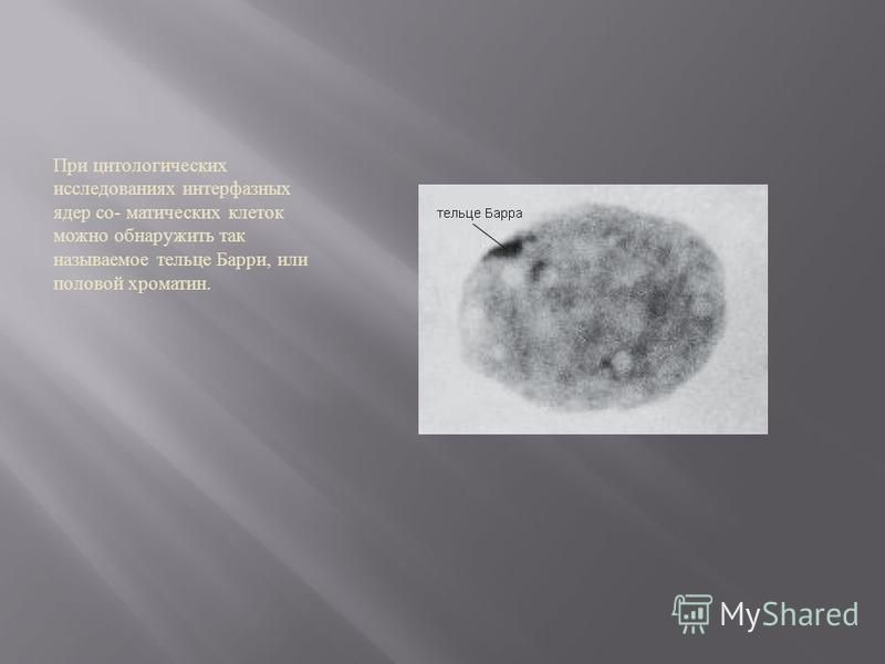 При цитологических исследованиях интерфазных ядер соматических клеток можно обнаружить так называемое тельце Барри, или половой хроматин.