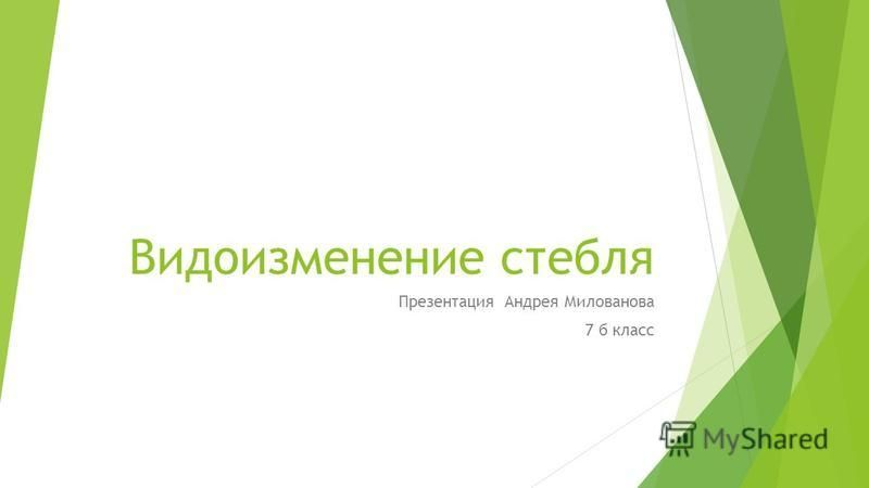 Видоизменение стебля Презентация Андрея Милованова 7 б класс